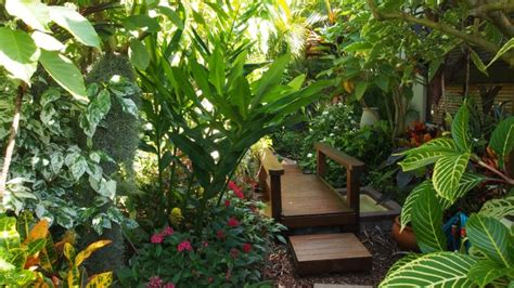 17 best images about plants on gardens tropical your garden how to grow tropical plants