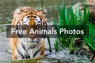 animals pictures free stock photos of animals 183 pexels
