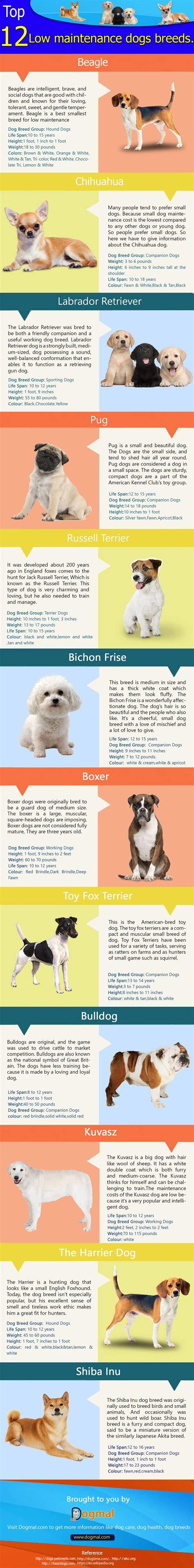 low maintenance breeds infographic 12 low maintenance breeds