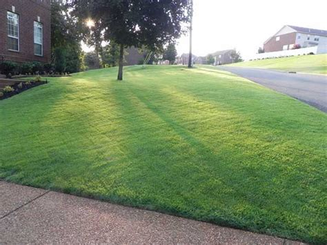 Growing Grass From Seed by 25 Best Ideas About Zoysia Grass On Mowing