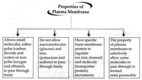 cell membrane permeability permeability cell membrane