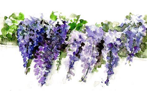 glicine fiori glicine fiori frutta in acquerello flowers fruit