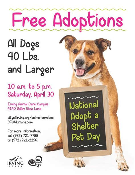 adopt a puppy for free free adoptions for national adopt a shelter pet day paws for irving animals