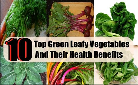 vegetables and their benefits 10 top green leafy vegetables and their manifold health