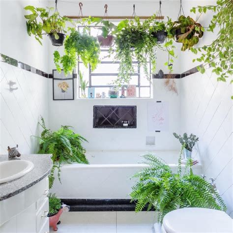 bathroom hanging plants shower plants the latest must have decor accessory photo 1