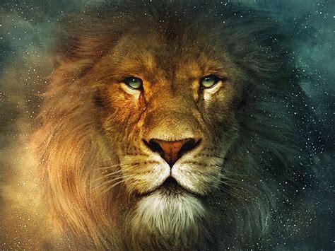 imagenes de tres leones juntos los leones supieron de la reuni 243 n y comentaron entre s 237