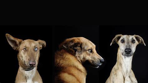 imagenes de animales faras todo lo que necesitas saber sobre los perros