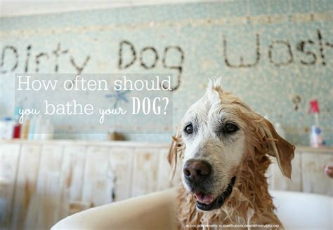 how often to bathe a puppy bath for itchy reliqpet golden woofs