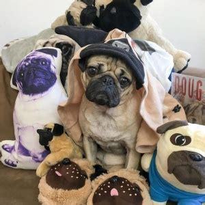 when is national pug day doug the pug s best moments on national pug day