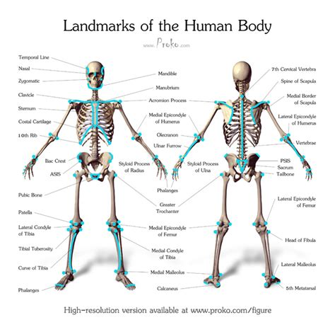 landmarks diagram landmarks of the human proko