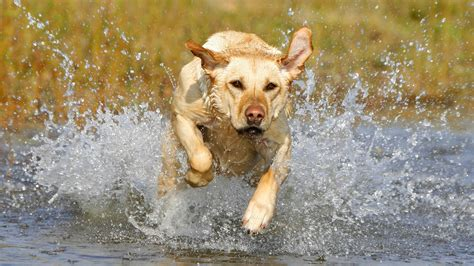 running dogs hd dogs wallpapers and photos hd animals wallpapers
