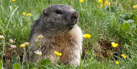 groundhog day house why groundhog day is no for animals peta