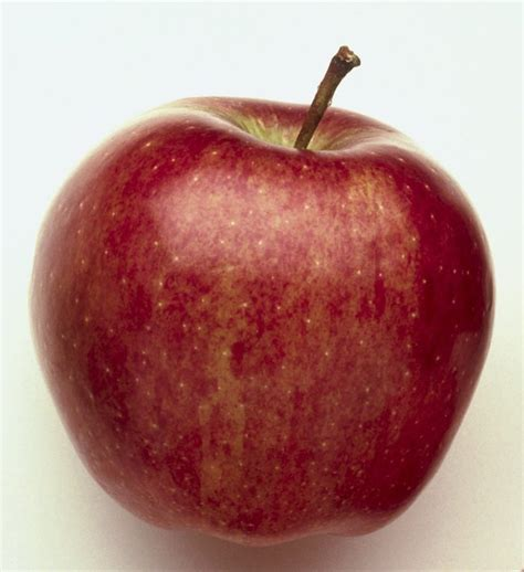 apple to apple starking apples products south africa starking apples supplier