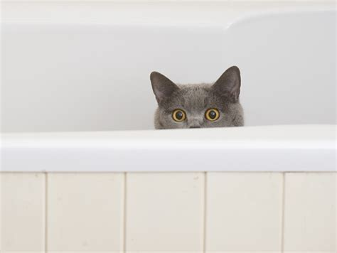 how often do cats go to the bathroom cat going to bathroom outside of litter box 28 images