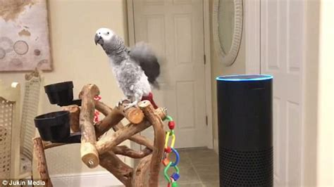 how to get alexa to turn on lights parrot orders amazon alexa to turn on lights express digest