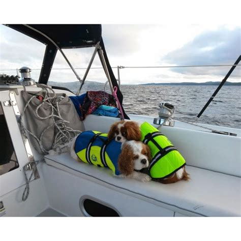 dog boat life jackets paws aboard neon yellow pet life jacket vest