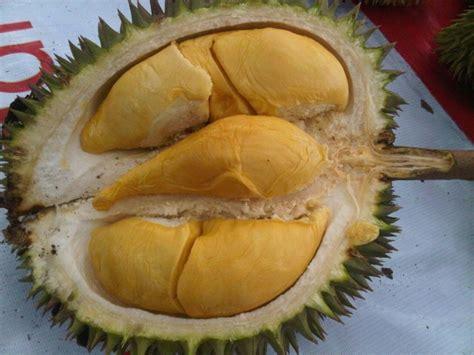 durian bawor banyumas jenis lokal rasa internasional