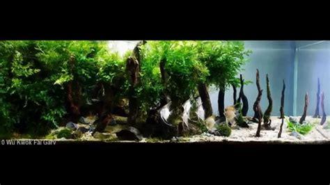 beautiful video самые красивые аквариумы акваскейп часть1 the most