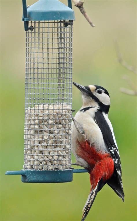 suet pellets suet bird food twootz com
