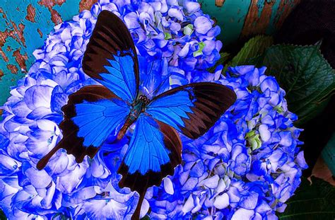 imagenes con mariposas bonitas imagenes bellas de mariposas imagenes de mariposas