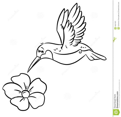 coloring pages hummingbirds flowers hummingbird and flower clipart clipartsgram
