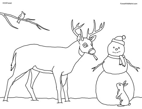 coloring book deer forest wildlife coloring book page for