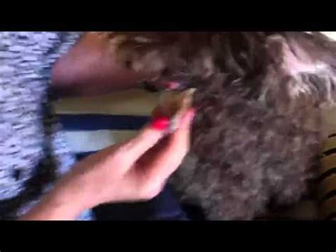 how to remove warts on dogs health how to treat warts