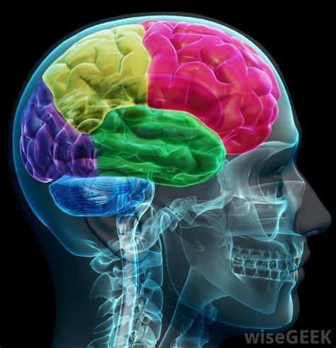 insula  pictures