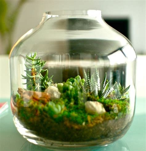 best plants for self contained terrarium terrarium d 233 coratif 224 fabriquer soi m 234 me