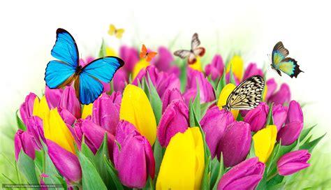sfondi desktop fiori e farfalle scaricare gli sfondi farfalle primavera fiori tulipani