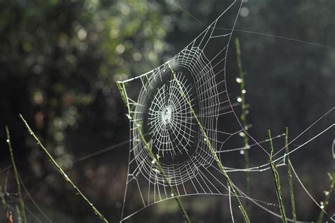 foto web free stock photo of spider web spiderweb web