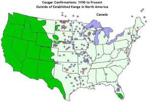 florida panther sightings map cougars extinct in east no way say those who claim