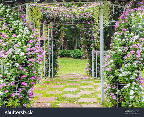 Wedding Background Garden by Blooming Flower Arch Footpath Garden Wedding Stock Photo