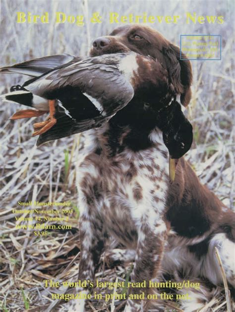 bird dogs a kleine small munsterlander breeder