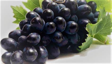 imagenes las uvas variedades b 225 sicas de uva negra en el resto del mundo