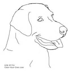 labrador retriever headstudy coloring page