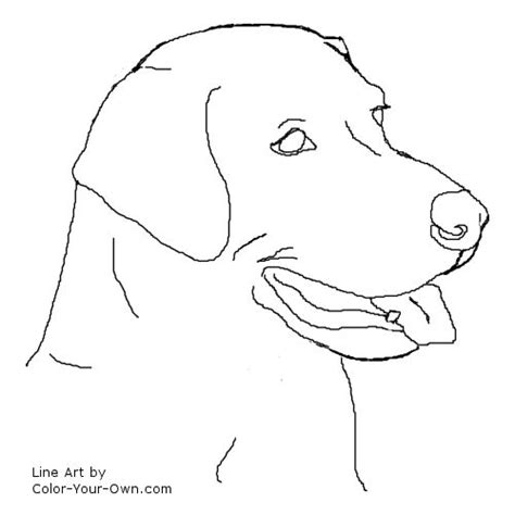 coloring pages of lab puppies dog labrador retriever headstudy coloring page