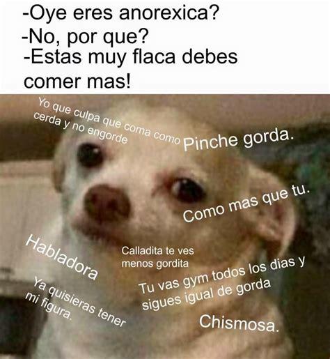 Mexican Chihuahua Meme
