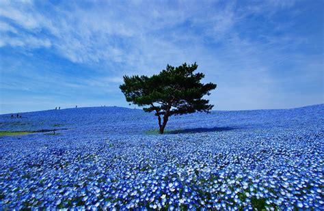 imagenes de paisajes azules imagenes de paisajes azules