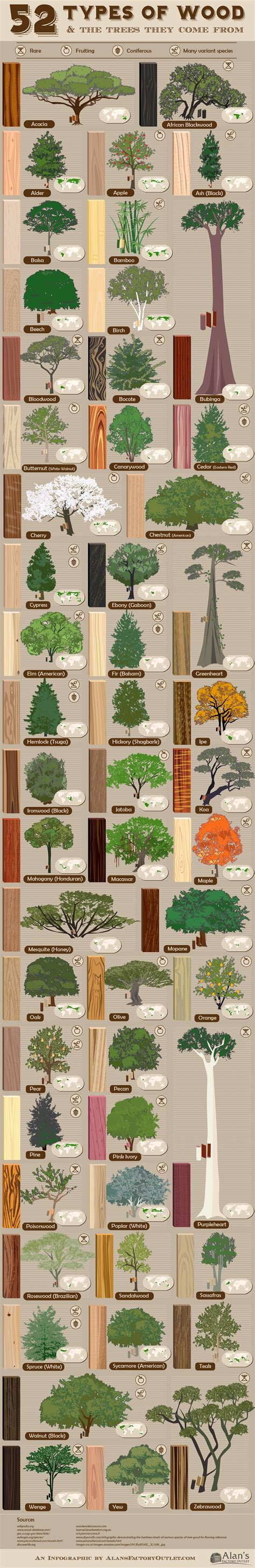 What Type Of Tree Is Used To Make Paper - 52 types of wood and the trees they come from