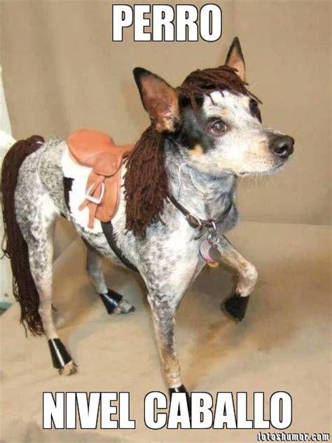 memes de caballos imagenes chistosas perro disfrazado de caballo fotos de humor