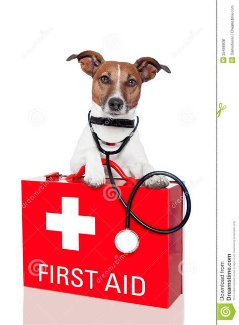 dogs aid aid royalty free stock photos image 25468938