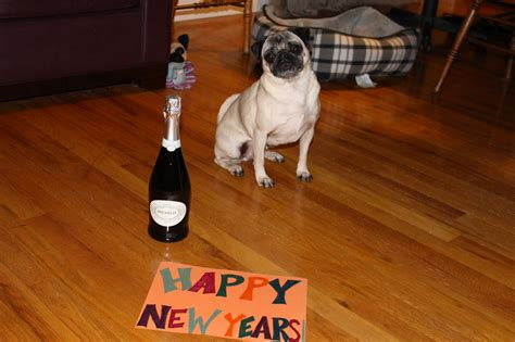 new year pug happy new year archives about pug