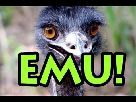 emu  crazy funny youtube