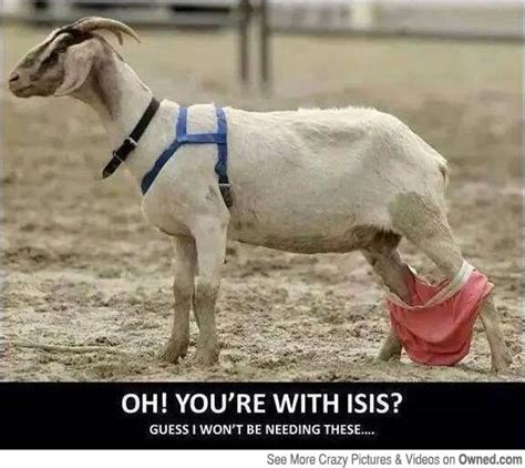 Funny Goat Memes - funny goat www pixshark com images galleries with a bite