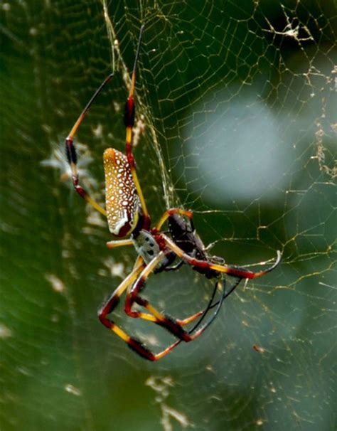 what is the scientific name for a what is the scientific name for a spider