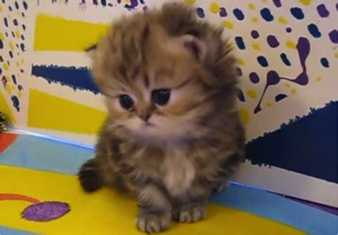 Baby Cat adorable baby kittens www pixshark images