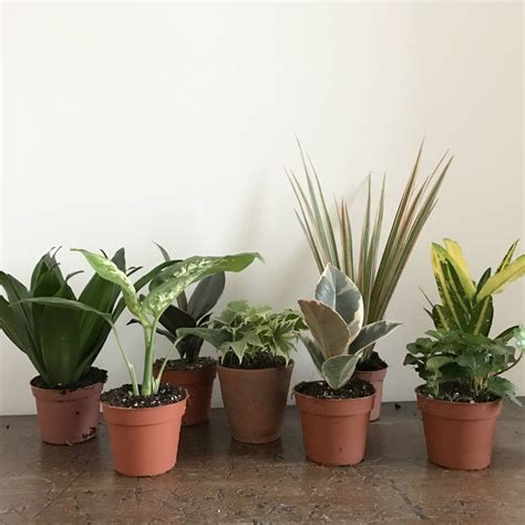 small house plant mini house plant selection by botanic tribe