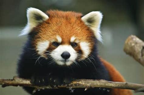 Natgeo Lis free national geographic pix endangered animals list free