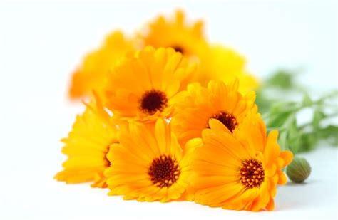 composizioni fiori recisi composizioni floreali regalare fiori caratteristiche